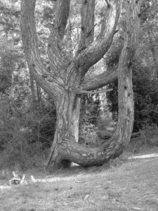 B/W Tree photo (2) in Wells Next the Sea by Debbie Sutton