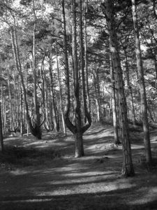 B/W Tree photo in Wells Next the Sea by Debbie Sutton