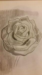 Rose by Jade's Gallery