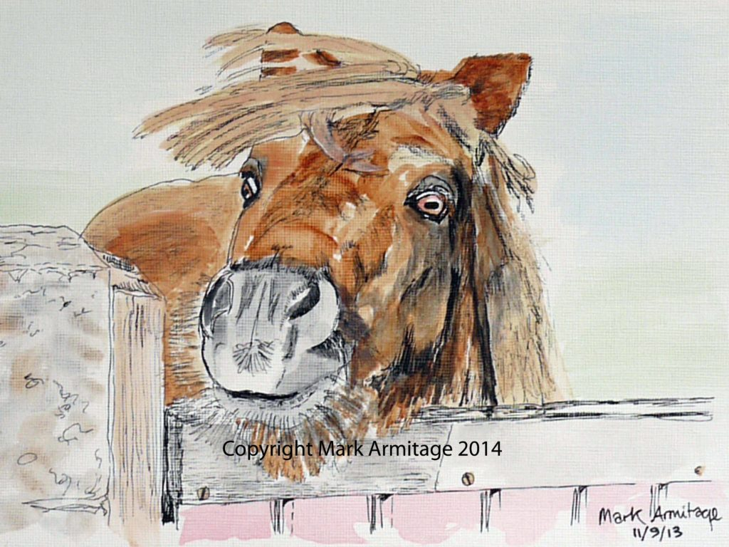 25658 || 4305 || shetland pony || If you intend to put this work up for sale || 7066