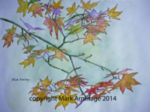 Acer autumnal colours by abstract landscape