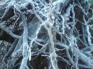 Freezing roots. by Steven Harris
