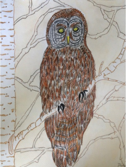 34919 || 5380 || Owl on a Silver Birch || NULL || 7883