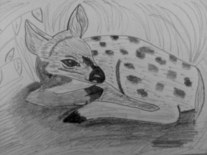 Baby fawn by Jade's Gallery