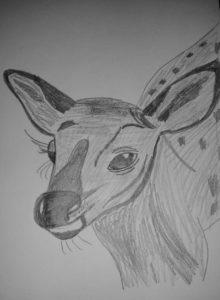 Baby deer smile by Jade's Gallery