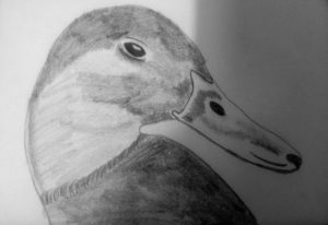 The Duck by Jade's Gallery