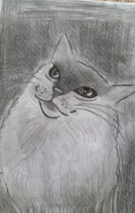Cat looking up the starry eye sky by Jade's Gallery