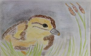 Baby duck by Jade's Gallery