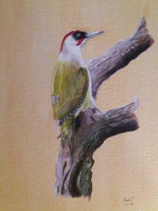 green woodpecker on guard by paul d