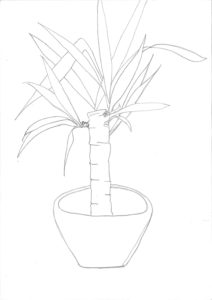 Yucca Plant by Roger Crichlow