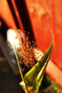 Spider millionz by Amy Barlow
