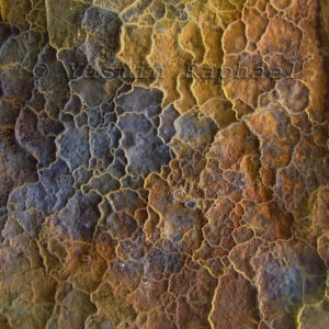 Corroded Iron Reticulation # 5 by Yasmin Raphael