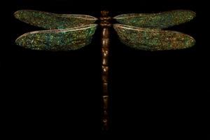 Morphogenic Dragonfly by Ross Gilbertson