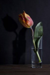 Still life with tulip by Steven Edgar