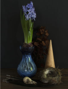 Still life with magpie skull by Steven Edgar