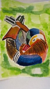 mandarin duck by Jade's Gallery