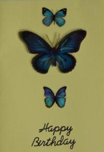 Blue butterflies by Ali Cruickshank