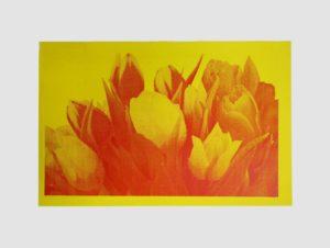 Tulips by Alice Fletcher