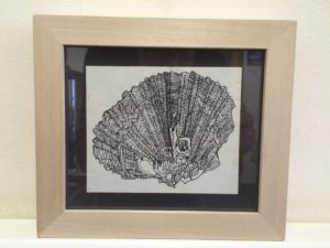 An Intricate Shell by Aquinas Okell
