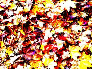 Angel Leaves by G.E.W. Shepherd