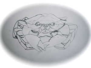 B&W Crab by Maximillian