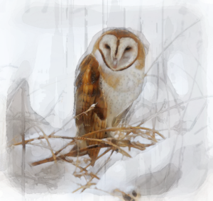 Barn Owl by Holy Carrot