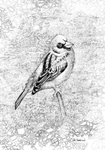 Bird Song by colin Hambrook