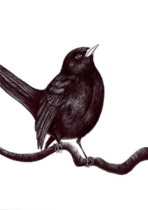 "Blackbird by Forest Inferno… ""The breakdown of our climate has begun. There will be more wildfires, unpredictable super storms, increasing famine and untold drought as food supplies and fresh water disappear."" https://rebellion.earth/declaration/"