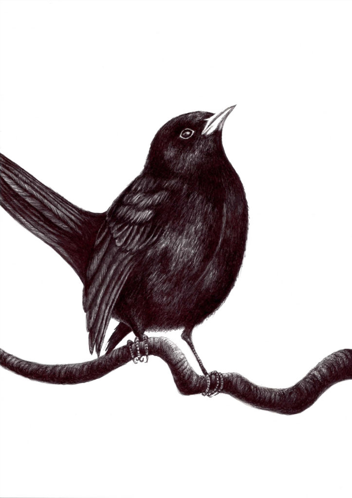 38407 || 5706 || Blackbird