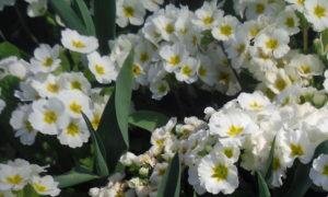 Bloomin luverly by mumamafia