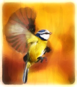 Blue Tit Full Colour by Holy Carrot