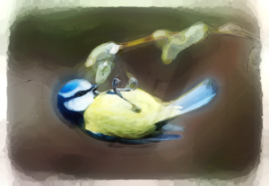 Little Blue Tit by Holy Carrot