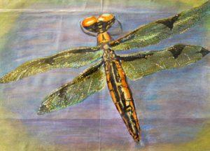 Dragonfly by Caroline Ruddick