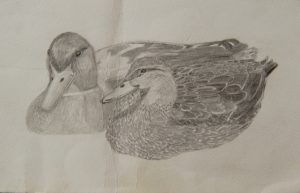 Two Mallards by Caroline Ruddick