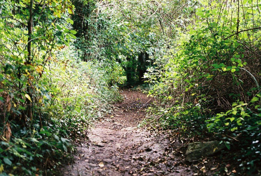 15271 || 3109 || Secret Path ||  || 5780