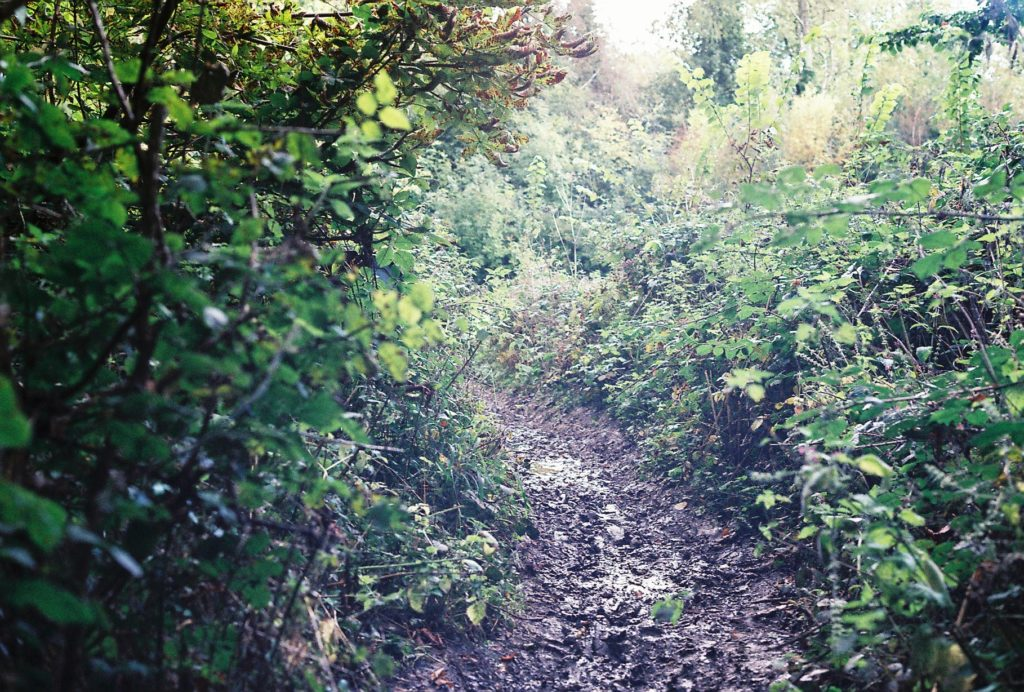 15273 || 3109 || Wooded Path ||  || 5780