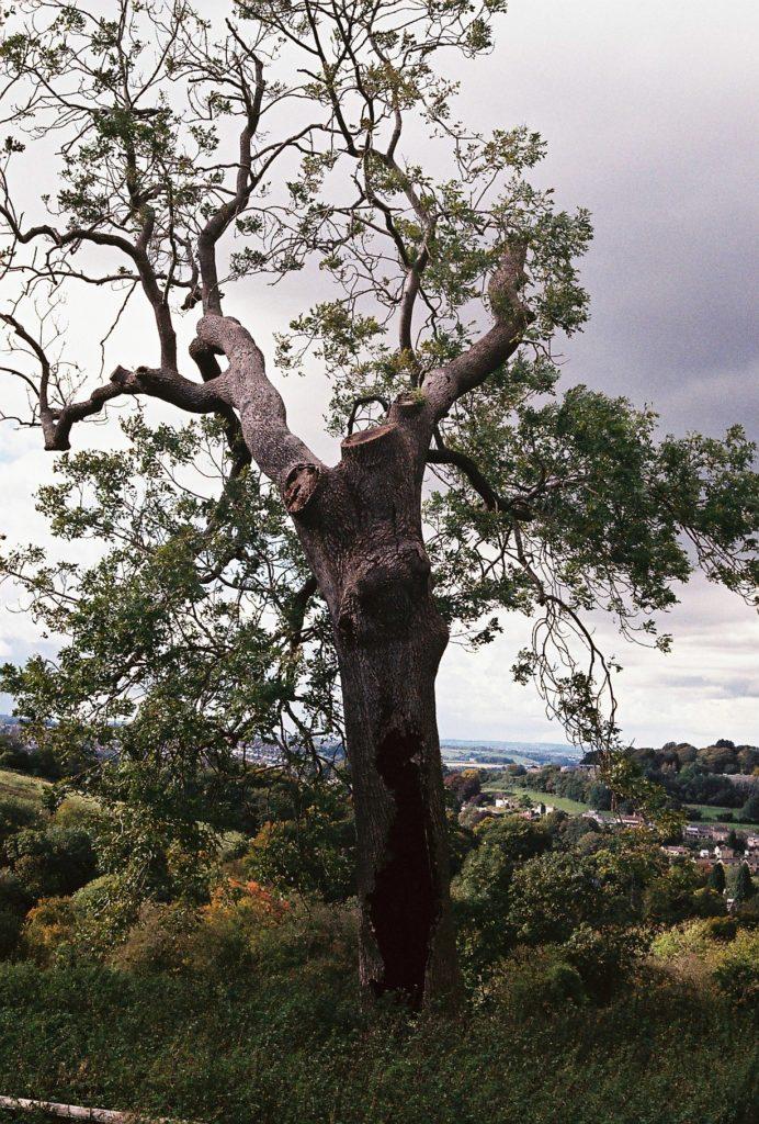 15274 || 3109 || Burnt Out Tree Still Living ||  || 5780