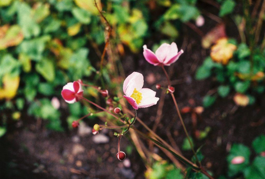 15285 || 3109 || Flower ||  || 5780