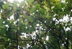 Spiders Web by In The Garden of the Cathedral