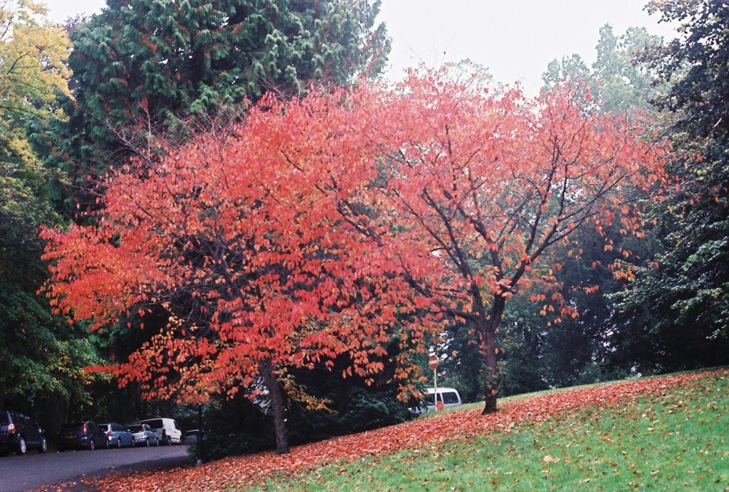 15283 || 3109 || Red Tree ||  || 5780