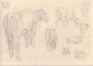 Cow studies by blodwyn jones