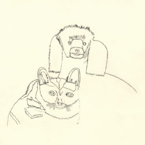 Dog and Cat by fox