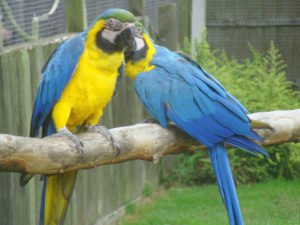 Much ado at the Macaw menagerie 1 by Perspicador