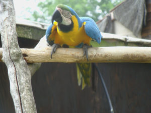 Much ado at the Macaw menagerie 6 by Perspicador