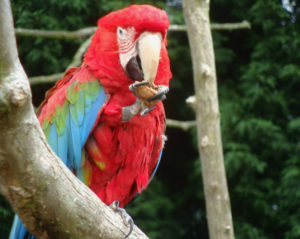 Much ado at the Macaw menagerie 5 by Perspicador