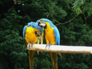 Much ado at the Macaw menagerie 4 by Perspicador