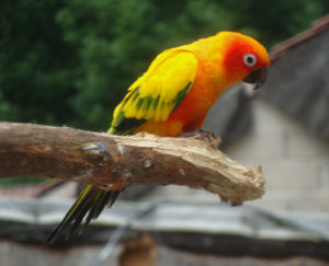 Much ado at the Macaw menagerie 2 by Perspicador