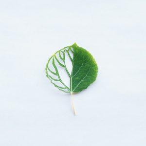 Aspen Leaf Cut by Anna Berry