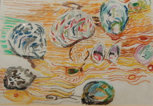Collection of shells by Ted