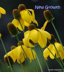 New Growth by Missjazzpiano